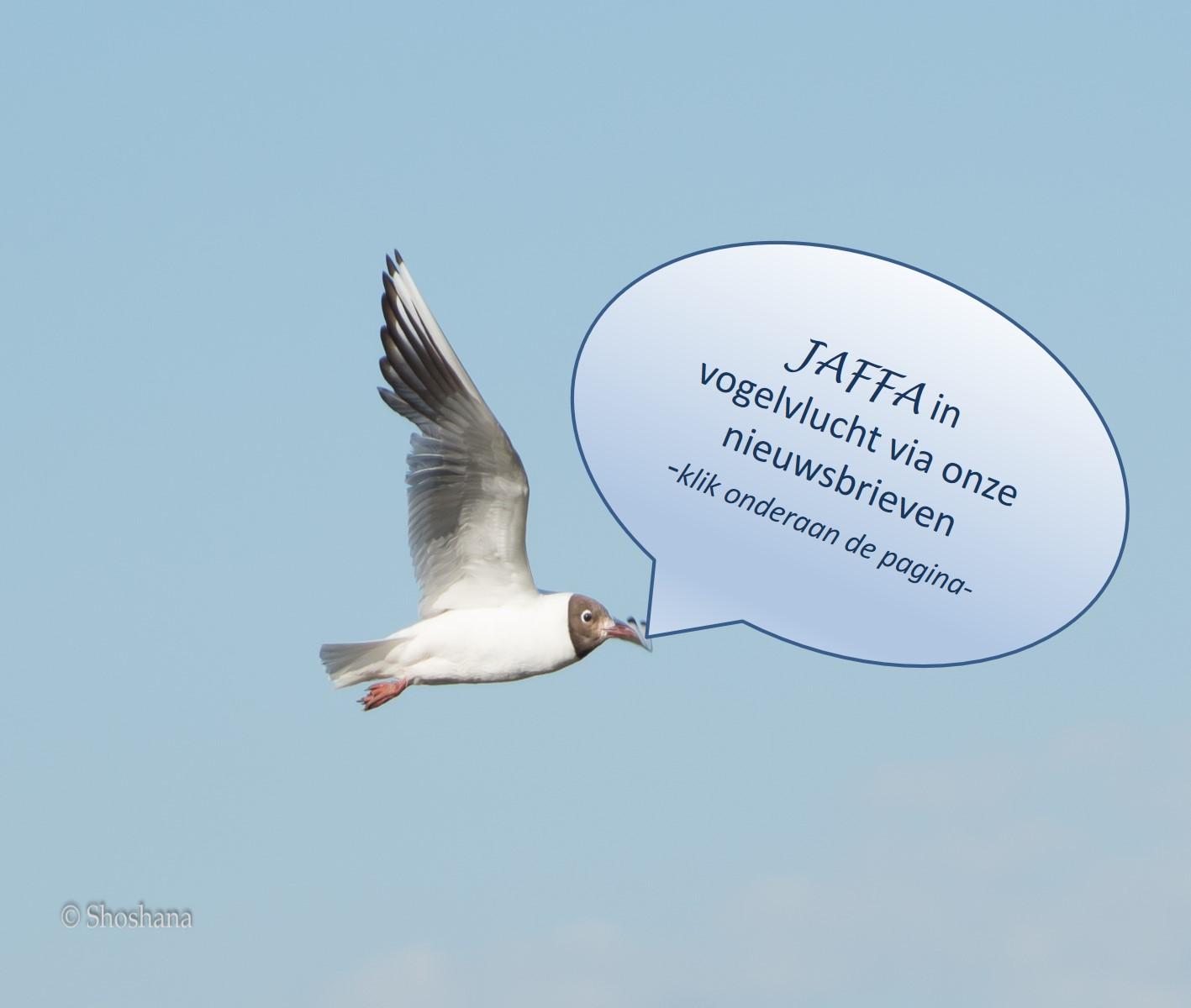 Jaffa in vogelvlucht nieuwsbrieven
